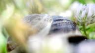 SERIES: Snail macro video