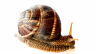 Snail Moving video