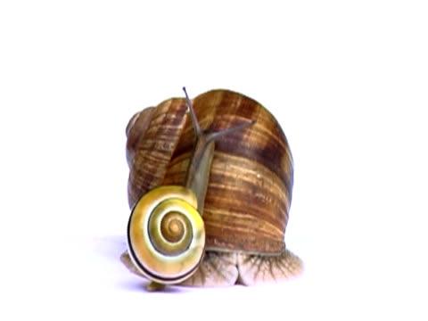 Snail NTSC video
