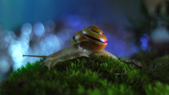 Snail on the moss video