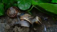 Snail on the snail video