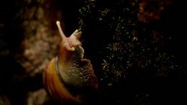 Snail on tree bark video