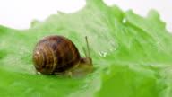 Snail shot out its horns video