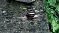 snail slides across video