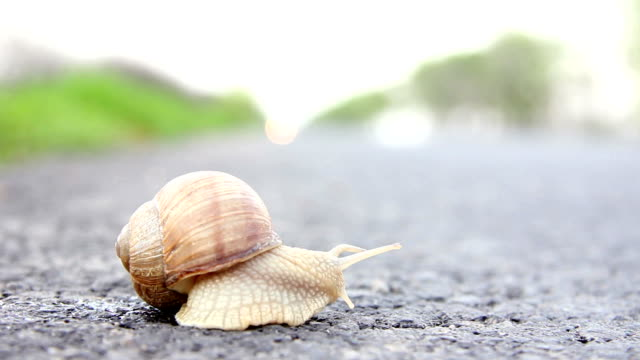 Snail trying to cross a road video