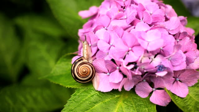 Snail video