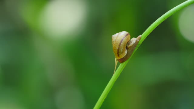 Snail walking on branches in the rainforest. video