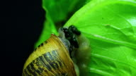 Snails time lapse video 4K video