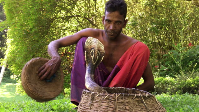 Snake Charmer in Sri Lanka video