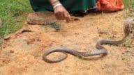 Snake charmer video