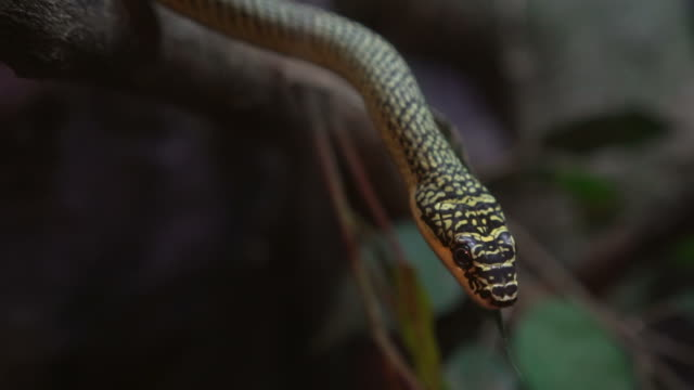 Snake Close Up video