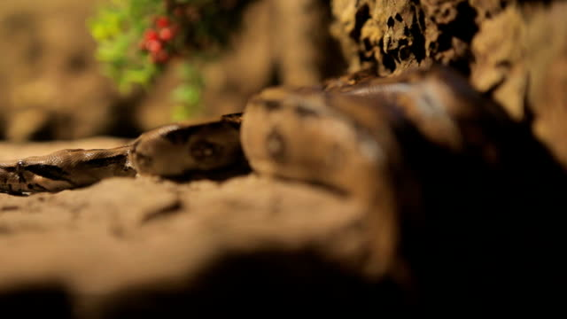 snake in dark forest video