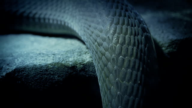 Snake Moving Over Rock Edge video