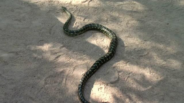 Snake slithering video