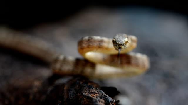 Snake video