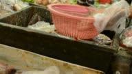 Snakehead fish kill video