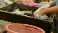 Snakehead fish spliting 2 video