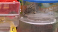 snakes and spiders video