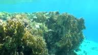snorkeler come up dahab video