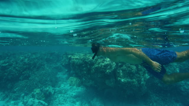 Snorkeling over Tropical Reef video