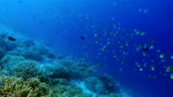 Snorkeling ride along coral reef with tropical fishes on Maldives video