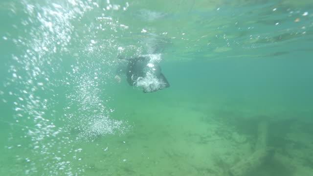 Snorkeling video