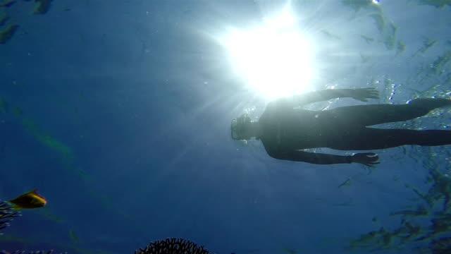 Snorkeling, View from below. video