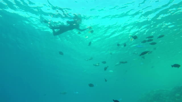 Snorkeling with Fishes, Dramatic view from below video