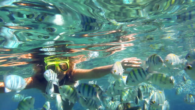 Snorkeling woman in red sea, around tropical fishes. video