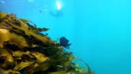 Snorkelling in Australia HD video