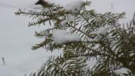 Snow 2 - HD 1080/30 time lapse video