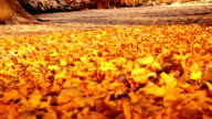 Snow and orange leaves on the ground video