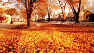 Snow and orange leaves video