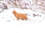 Snow Cat video