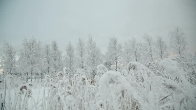 Snow covered branch. video
