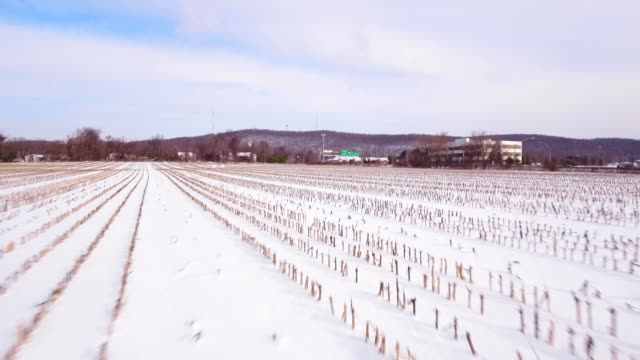 Snow covered corn field video