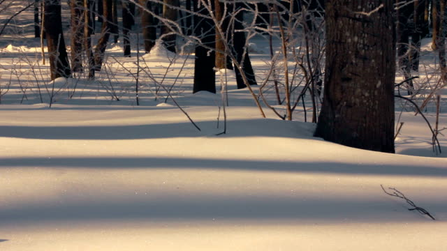 Snow covered forest in winter. Snow background. Panorama of winter forest video