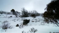 Snow Covered Mountains and Gum Trees in Australia video