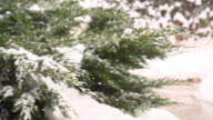 HD SUPER SLOW MO: Snow Covering The Cypress video