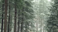Snow Fall in a Forest video