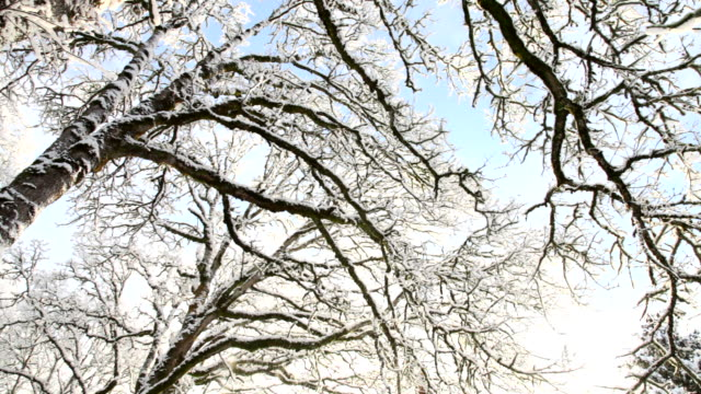 Snow falling from trees video