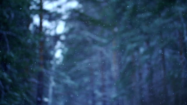 Snow falling in a forest video