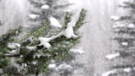 Snow falling in the forest video