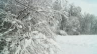 HD SLOW MOTION: Snow Falling Off Trees video