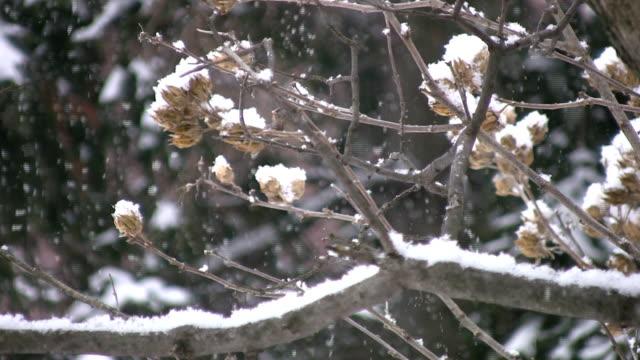Snow falling on branch. video