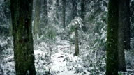 Snow Falling On Path Through Winter Forest video