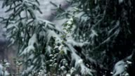 Snow falling on trees, winter landscape video