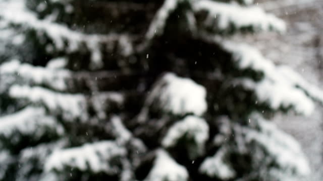 Snow. Falling snowflakes. Winter design concept. video