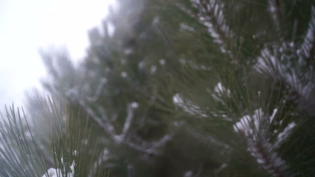 Snow Falling Through Blurry Branches of Evergreen Tree video