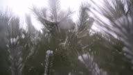 Snow Falling Through Pine Tree branches video
